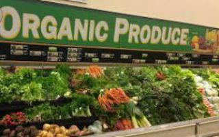 Эко-пищевые стартапы спасут планету