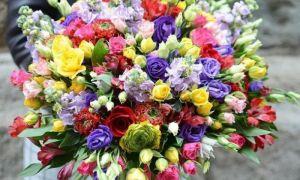 Наша доставка цветов порадует потребителей всесезонными и сезонными цветущими растениями
