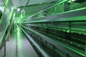 Комплекс «Южный» завершает подготовку индюшачьего производства