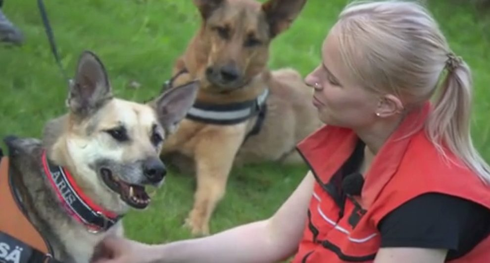 Финляндия принимает беспризорных собак Кабардино-Балкарии